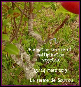 Formation greffe et multiplication végétale