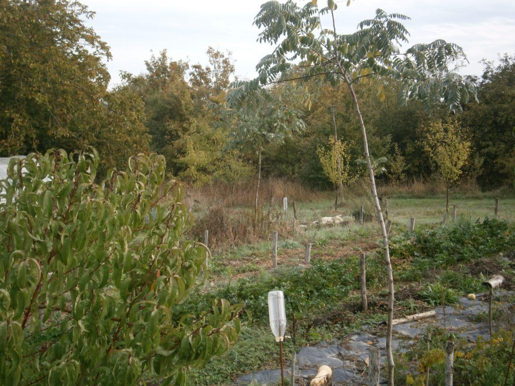 La place de l'arbre et des aromatiques au jardin (37160) @ la ferme des Châtaigniers